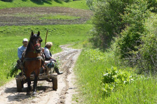 P1000905 Transylvanie charrette ©bernard.houliat