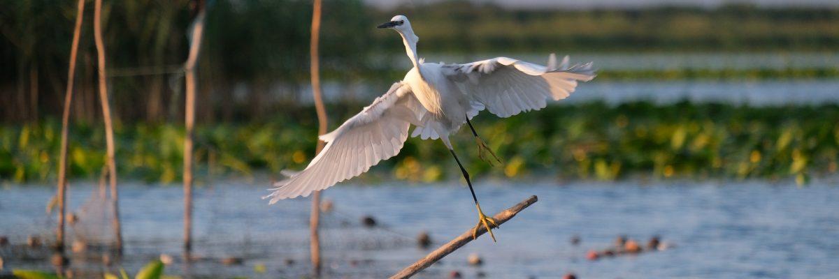 little-egret-5764976_1920